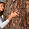 Kurkvloer - vrouwboom